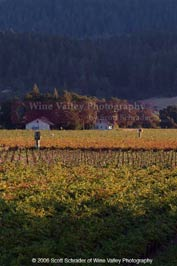 Shades of Fall by Scott Schrader of Wine Valley Photography